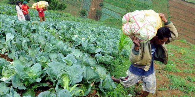 Dinilai Tepat Jadi Lokasi Pertanian, Lingga Akan Suplai Sembako ke Seluruh Kepri