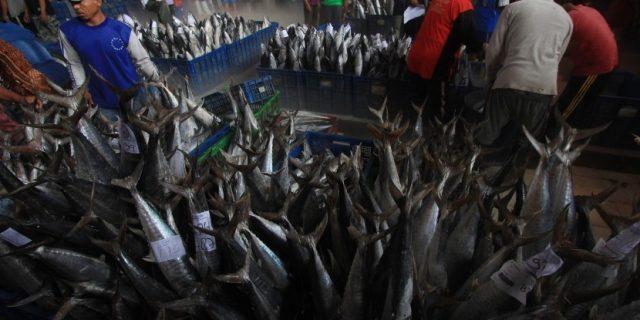 Menteri Susi: Kapal Penangkap Ikan Harus Bongkar Muat Di TPI Resmi
