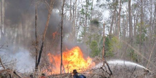 Kebun Masyarakat di Pulau Bengkalis Terbakar