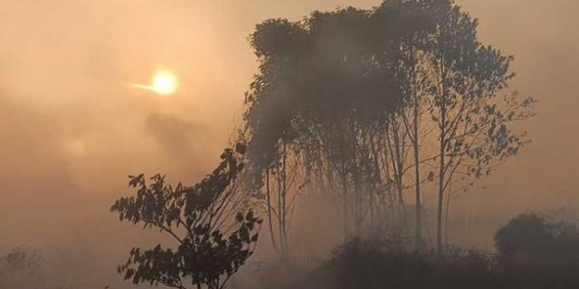 BMKG Deteksi 183 Titik Panas di Sumatera, Wilayah Riau Paling Banyak