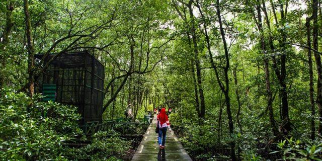 Pelestarian Hutan Mangrove Tingkatkan Wisata Alam