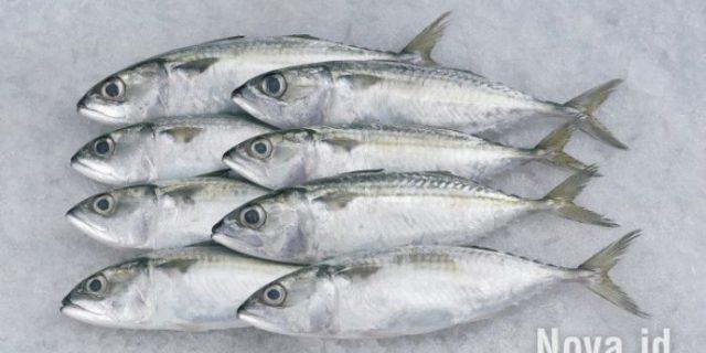 Cara Pilih Ikan yang Masih Segar