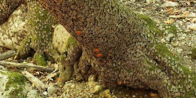 Lembah Kupu-kupu di Barat Pulau Yunani