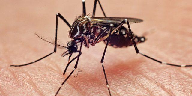 Tanaman Cantik Ini Mampu Mengusir Nyamuk