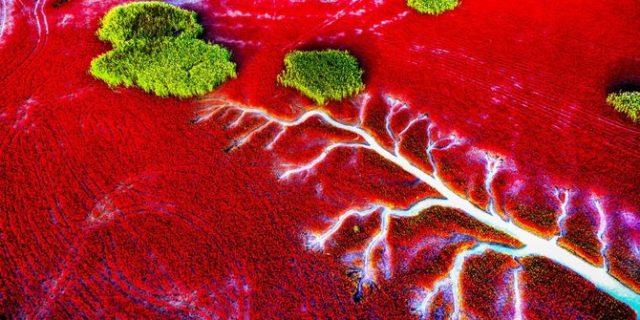 Pantai Ini Mendadak Berubah Jadi Merah Darah Saat Musim Gugur